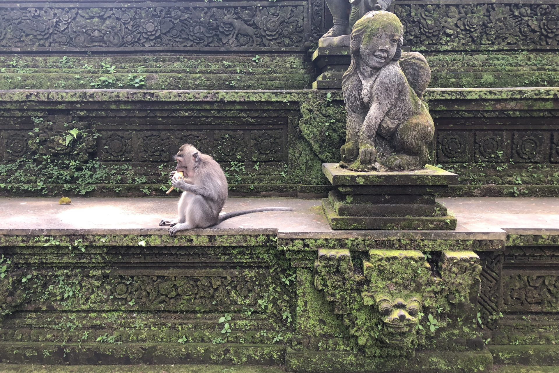 Visiting the Monkey Forest Ubud Bali Indonesia Stuff to do in Bali Bali Attractions