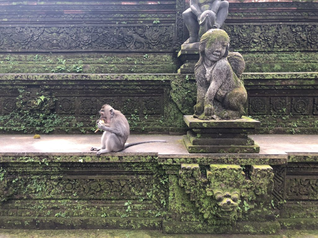 Visiting the Monkey Forest Ubud Bali Indonesia Stuff to do in Bali Bali Attractions 10