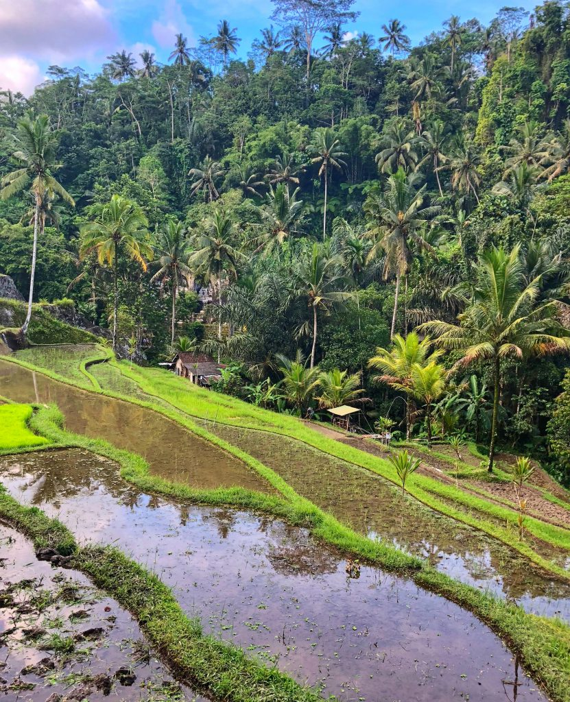 Gunung Kawi Temple Ubud Bali Indonesia Travel Rice Fields Big Rocks