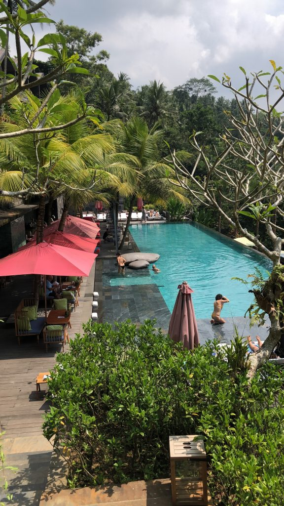 Jungle Fish Swimming Ubud Bali Indonesia Reservations Price Entrance Fee Hotel